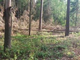 Opakovaná výzva vlastníkům lesa k zajištění ochrany lesa před kůrovcovou kalamitou